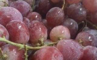 Виноград бычий глаз: описание сорта с фото, отзывы, посадка и уход