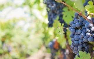 Посадка винограда весной , видео, советы , методы