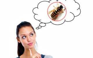 Борьба с осами: эффективные методы борьбы
