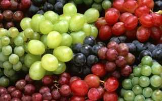 Подходящие сорта винограда для средней полосы России