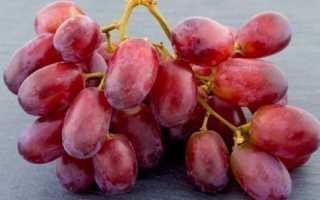 Виноград Скарлет Роял (Scarlet Royal): что нужно знать о нем, описание сорта, отзывы