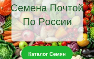 Сорта винограда, характеристики и описание