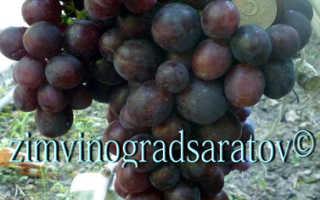 Виноград Али-Баба: что нужно знать о нем, описание сорта, отзывы