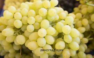 Столовые сорта винограда . Характеристика и описание сортов