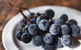 Виноград Конкорд: что нужно знать о нем, описание сорта, отзывы