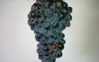 Виноград Асма: что нужно знать о нем, описание сорта, отзывы