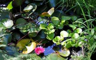 Подходящие растения для пруда