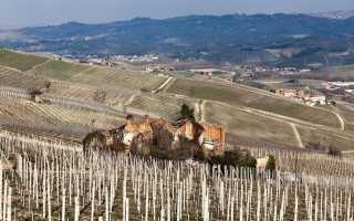 Вино Бароло: что нужно знать о нем, описание сорта, отзывы