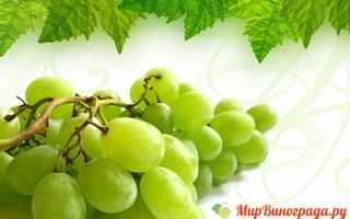 Зеленый виноград (полезные свойства, беременным, виноделие)