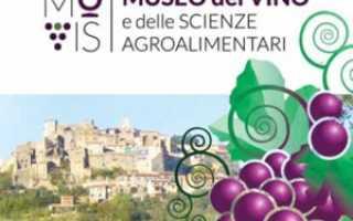 Вино Умбрия: что нужно знать о нем, описание сорта, отзывы