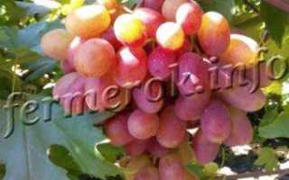 Чем и когда подкармливать виноград