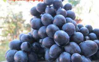 Виноград Неро: что нужно знать о нем, описание сорта, отзывы