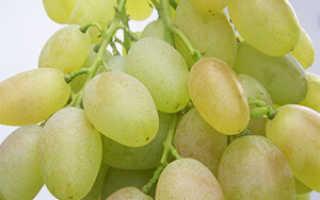 Виноград Вероника: что нужно знать о нем, описание сорта, отзывы