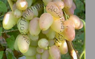 Виноград Денал. Описание , характеристика сорта