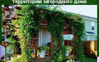Эффектное озеленение для ландшафтного дизайна
