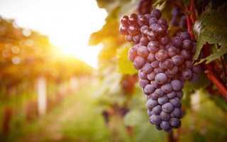 Красное сухое вино: технология производства, польза и вред