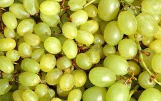 Виноград Матраса: что нужно знать о нем, описание сорта, отзывы