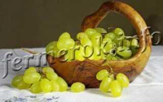 Виноград Лора  : что нужно знать о нем, описание сорта, отзывы
