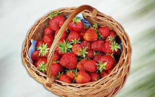 Самые урожайные сорта клубники с описанием и фото