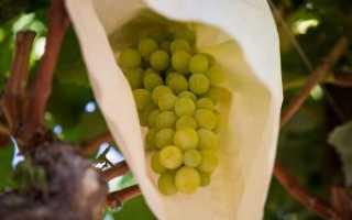 Виноград Аликанте: что нужно знать о нем, описание сорта, отзывы