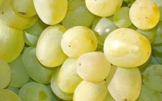 Виноград Яблочный: что нужно знать о нем, описание сорта, отзывы