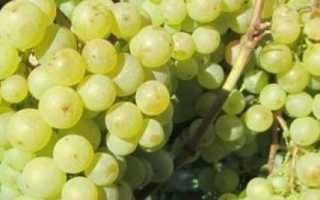 Сорт винограда Заря севера: что нужно знать о нем, описание сорта, отзывы
