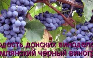 Виноград Цимлянский черный: что нужно знать о нем, описание сорта, отзывы